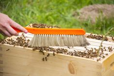 How to buy honey bees for the new beekeeper. Honey Bees For Sale, Buy Honey, Package Bees, Different Bees, Types Of Bees, Beekeeping Equipment, Bee Keeping, Queen Bees, Farm Life