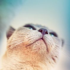 Cat image from a unique angle. What is it he is looking at I can only  wonder.