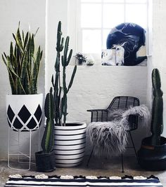 Love this #interiorstyling by ivymuse_melb - monochrome & cacus, whats not to love?!