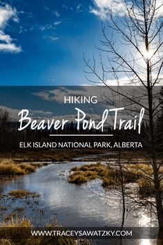 Hiking Beaver Pond Trail - Elk Island National Park, Alberta Parks Canada, Canada Eh, Types Of Moss, Alberta Travel, Hiking Tips, Best Hikes, Before Us, Alberta Canada, Canada Travel