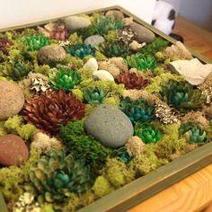 DIY faux succulent garden. Pistachio shell succulents, misc rocks and bits of moss.