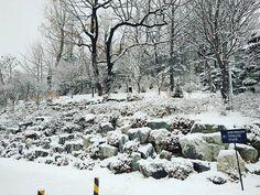 #눈 #눈이 #와요 #눈이오다 #많다 #하얀색 #모두모두 #좋아해 #하지만 #추워 #snow #snowwhite #snow❄️ #cold #socold #한국 #겨울 #한국겨울
