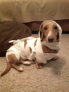 Jasper as The Mummy.