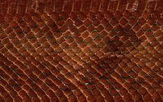 real-animal-skin-textures-snake