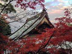Autumn at Miyajima (iPhone 5)