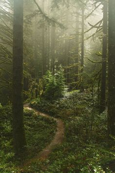 Misty forest at Silverton falls area, Oregon! Misty forest at Silverton falls area, Oregon! Misty Forest, Forest Path, Forest Trail, The Forest, Conifer Forest, Forest Fairy, Beautiful World, Beautiful Places, Beautiful Forest