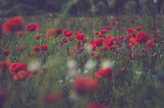 red land by karmasubstrat