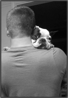 French Bulldog Hugs, they can fix anything.