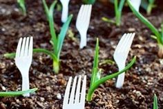 "Are your pets a little too curious about what's going on in your garden?  Try placing some plastic forks in the ground around your plants.  It will deter your ""curious cat"" from munching on your greenery!"