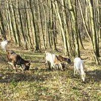 விவசாயம் | Vivasayam பற்றிய கட்டுரைகள் ,தோட்டக்கலை பயிர்கள், ஆடு மாடு வளர்ப்பு Blog Images, Aqua, Dogs, Animals, Water, Animales, Animaux, Pet Dogs, Doggies