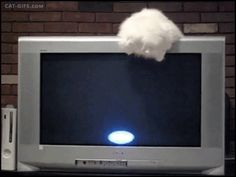 Animated Cat GIF • Playful Cat vs. screensaver Damned! Kitty goes nuts after the white ball.
