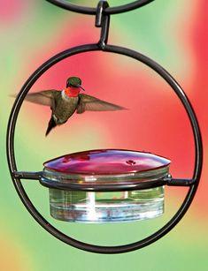 Glass Hummingbird Feeder