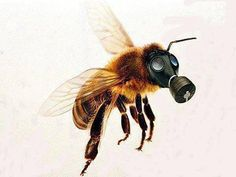 #HoneyBees Are In Danger From Poison Within Our Plants.