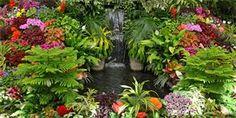 Tropická zahrada v Čechách? Jde to!
