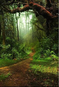 Forest Big Tree Road Photography Backdrop G-477 - 3'W*5'H(1*1.5m)
