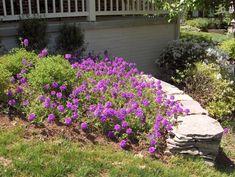 Grigg Design - Softscapes - Landscaping Northern Virginia - Grigg Design I Landscape Design, NOVA, Patios