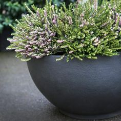 Gavin Jones - Living Green - Bodacia Planter - Grey