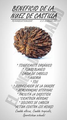 #BENEFICIOS #NUEZ #CASTILLA #PLANTAS MEDICINALES #SALUD #BIENESTAR