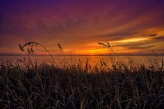 Seaoats at Sunrise from Coral Cove Park by Captain Kimo - & in Florida& Tequesta Florida, Sun Silhouette, Good Morning Sunshine, Out Of Africa, Sunshine State, Florida Home, Summer Sun, Coral, Clip Art