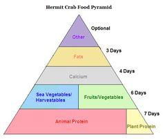 Very helpful hermit crab food pyramid from the HCA (hermitcrabassociation.com). Best hermit crab site ever! :D