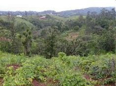 puede llegar allí, además pueden ir en bote desde la isla de Bioko en Guinea Ecuatorial. Camerún. Bosques húmedos en Camerún.