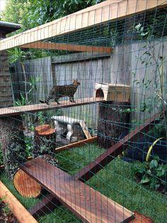 Cat enclosure walnut perches with oak tree stumps.