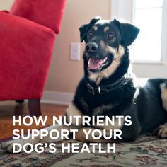 How much do you know about your dog's digestion? #ONEdifference