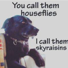Noodle LOVES skyraisins!