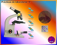 Crea y aprende con Laura: MICROSCOPIOS VIRTUALES Science, Labs, Space, Create, Activities, Lab, Floor Space, Labrador