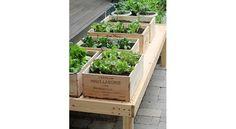 Comment réutiliser les cagettes de fruits et légumes ?