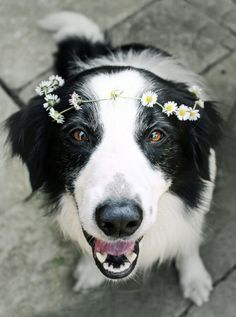 dogs with flower crowns - Google Search