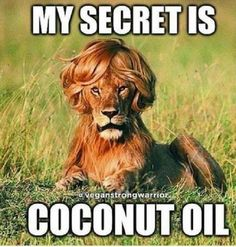 Funny Animal Pictures Of The Day 19 Pics - Funny Animal Quotes - - The post Funny Animal Pictures Of The Day 19 Pics appeared first on Gag Dad. Cute Animal Memes, Funny Animal Quotes, Animal Jokes, Funny Animal Pictures, Cute Funny Animals, Funny Cute, Animal Captions, Funny Pictures For Kids, Mom Funny