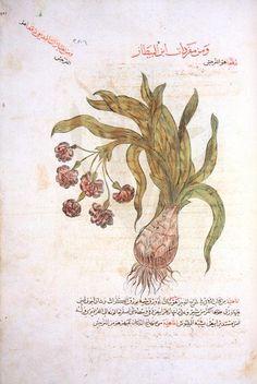 Ibn Baytar, Câmiu mufredat al-adviya wa'l-agdiya. Süleymaniye Library, Ayasofya Coll., MS 3748.