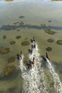 The horses on Shacleford Island NC