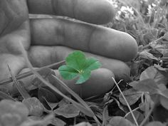 This emphasis the green clover while everything else is black and white.