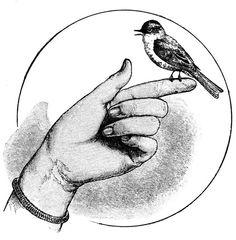 Vintage bird on Finger ~ Álbum de imágenes para la inspiración (pág. 95) | Aprender manualidades es facilisimo.com