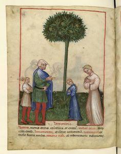 Nouvelle acquisition latine 1673, fol. 86v, Biologie: rougissement. Tacuinum sanitatis, Milano or Pavie (Italy), 1390-1400.
