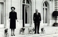 The Windsors and their pugs