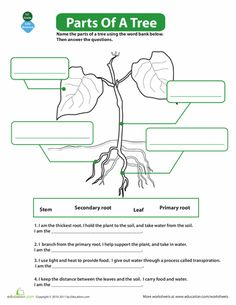 Worksheets: The Parts of a Tree
