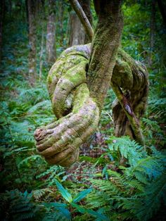 Hands in Knots, African Rainforest Vines Weird Trees, Twisted Tree, Unique Trees, Old Trees, Nature Tree, Nature Plants, Cactus Plants, Tree Trunks, Tree Forest