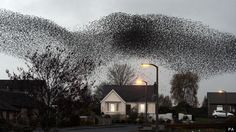 Starling Murmuration Above Gretna Green, Scotland (PICTURES, VIDEO)