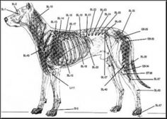 Acupuncture is a deep, internal therapy that works by inserting tiny needles into various identified points on your dog's body. New York Acupuncture http://kimura-acupuncture.com/