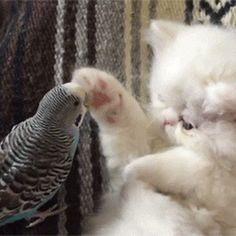 Cute bird play with cute little cat so funny
