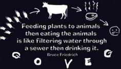 Stop eating shit x choose to be vegan Vegan Facts, Vegan Memes, Vegan Quotes, Vegan Humor, Why Vegan, Vegan Vegetarian, Vegan Food, Clean Recipes, Raw Food Recipes