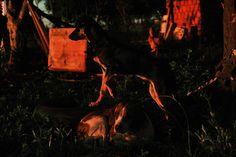 """Olhares do avesso: País Maravilha """"... Lá vinha o amanhecer e ela estava desatenta ..."""" """"... There was dawn and she was inattentive ..."""" http://olharesdoavesso.blogspot.com.br/2015/06/pais-maravilha.html?m=1 #Trabalho #desrespeito #Work #disrespect #工作 #不尊重 #Arbeit #Respektlosigkeit #Travail #lemanquederespect #कार्य #अनादर#Работа #неуважение #dog #dogs #pet #pets #animal #animals #dogspintrest #petspint #petsofpintrest #animallovers #animalprint #animales"""