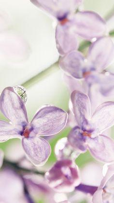 Rain on pale petals Growing Flowers, Planting Flowers, Pretty Flowers, Wild Flowers, Macro Photography, Flower Photography, Lavender Green, Dream Garden, Favorite Color
