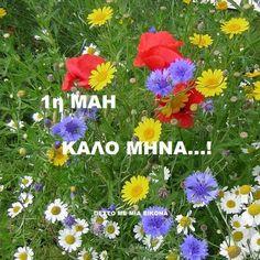 Mina, Pj, Plants, Beautiful, Flora, Plant