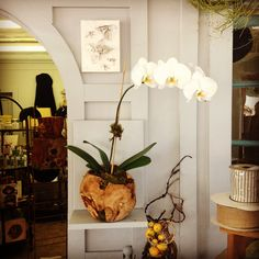Orchid composition Fresh orchids are always available at  The French Market #thefrenchmarket #orchid #moss #wood #flowers #fleur #botanical #gift #therealdeal #fresh