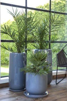 Disse 7 plantene tåler fint å stå i skyggen | Stelletips fra Mester Grønn Planters, Girly, Outdoor, Porches, Lady Like, Outdoors, Girly Girl, Planter Boxes, Plant
