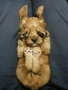 Community Post: The Bizarre Ways That Dogs Like To Sleep